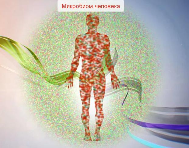 Баланс микрофлоры кишечсника