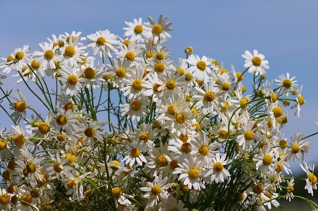 Травяной сбор для лечения дисбактериоза