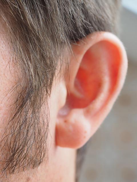 Внешнее ухо