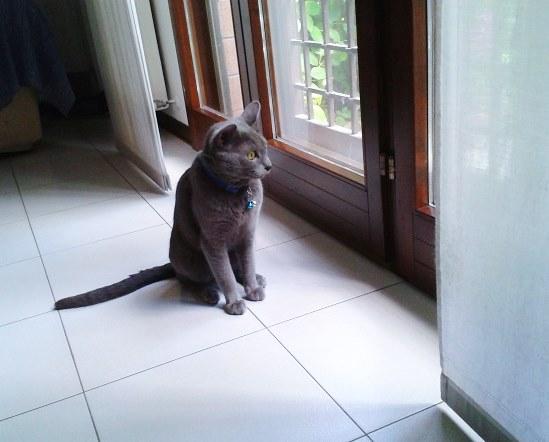 Как облегчить жизнь себе и коту