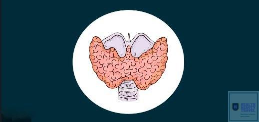 Щитовидная железа строение